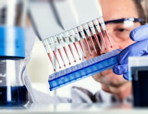 Scientist uses multipipette during DNA research